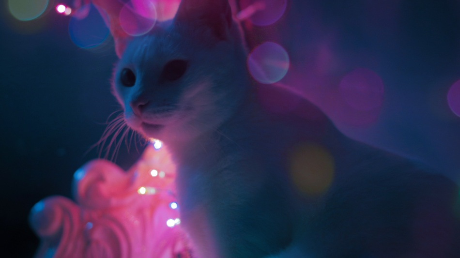 brandon_woelfel_Photography