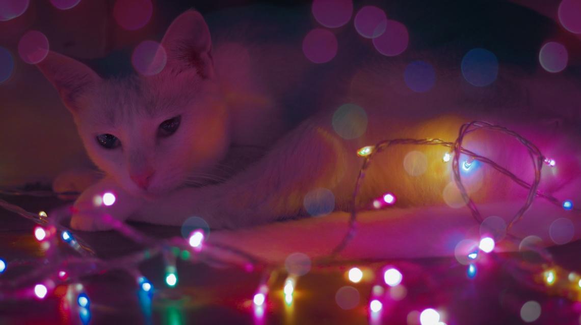Fairy_lights_photography