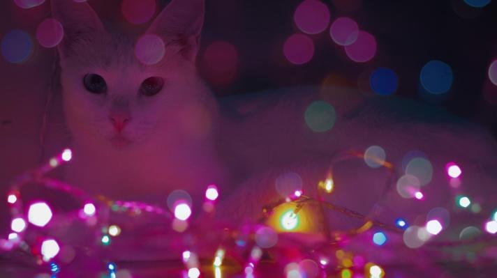 Neon_lights_photography